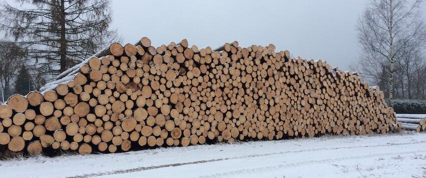 Raiete korraldamine & puidu müük
